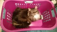 Der neue Wäschekorb