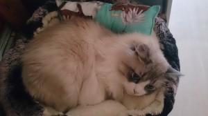 Das neue Baldrian Katzenkissen, scheint gemütlich zu sein :-)