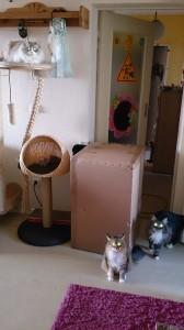Was Frauchen da wohl in der Kiste versteckt...